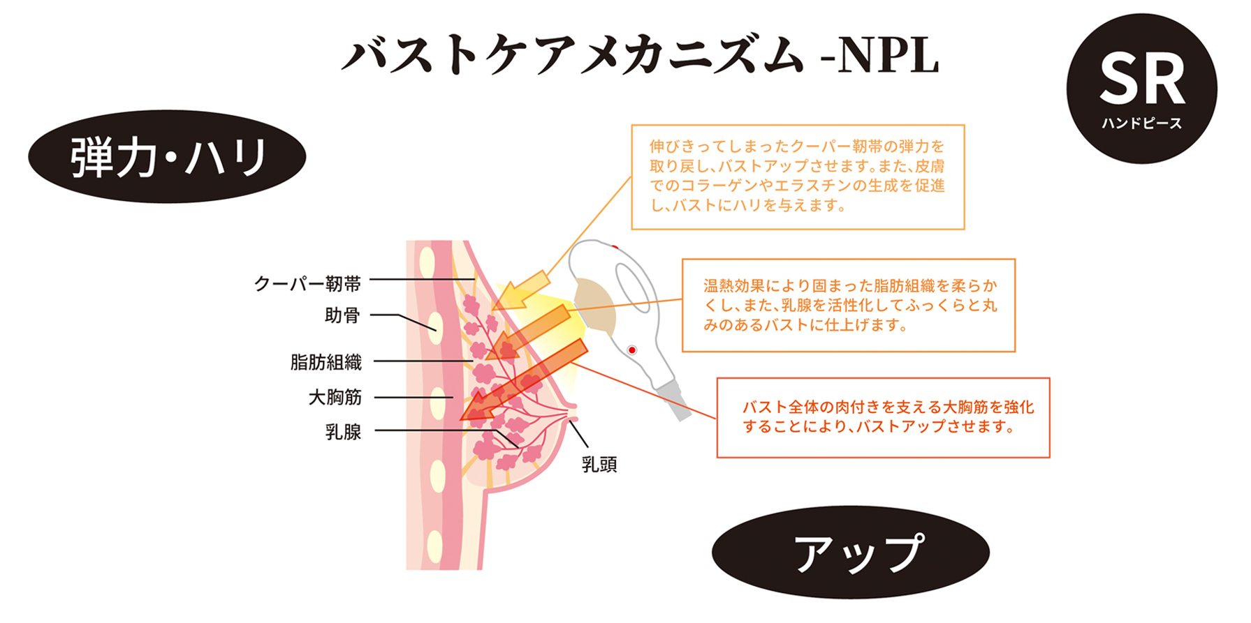 バストケアメカニズム(NLP)